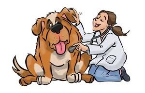 La medicina veterinaria como vocación cristiana